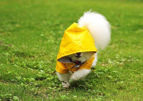 幸せの黄色いカッパ_d0360206_13041139.jpg
