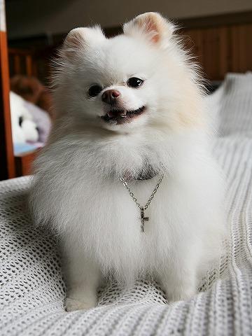 笑顔を見せて_d0360206_13055611.jpg