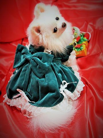 わたしからメリークリスマス_d0360206_13142981.jpg