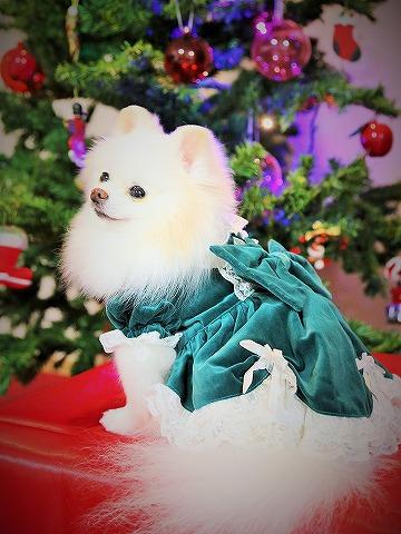 わたしからメリークリスマス_d0360206_13143024.jpg