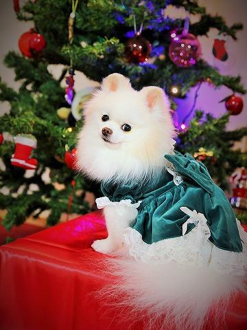 わたしからメリークリスマス_d0360206_13143044.jpg