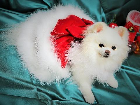 わたしからメリークリスマス_d0360206_13143142.jpg