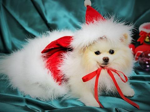 わたしからメリークリスマス_d0360206_13143251.jpg