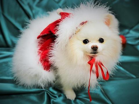 わたしからメリークリスマス_d0360206_13143304.jpg