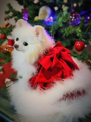 わたしからメリークリスマス_d0360206_13143474.jpg