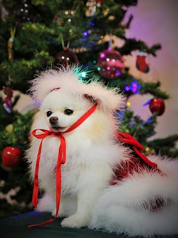 わたしからメリークリスマス_d0360206_13143479.jpg