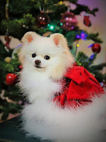 わたしからメリークリスマス_d0360206_13143599.jpg