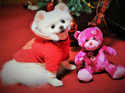 サンタクロースがやって来た!!_d0360206_13143978.jpg