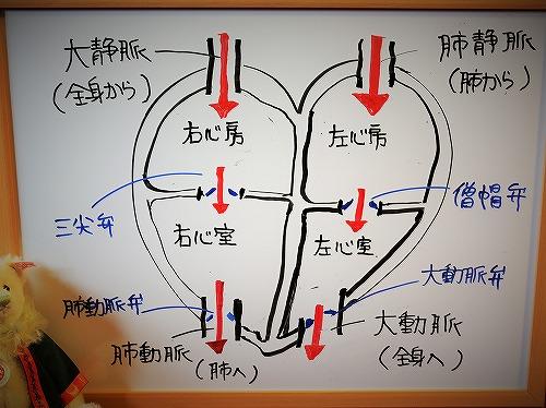 ゆきの心臓病講座_d0360206_13172491.jpg