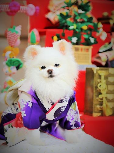 豪華絢爛ひな祭り_d0360206_13180485.jpg