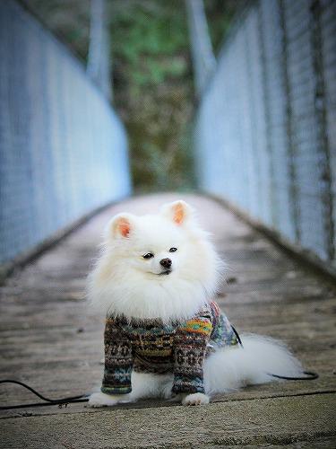 愛玩犬とは何ぞ?_d0360206_13184595.jpg
