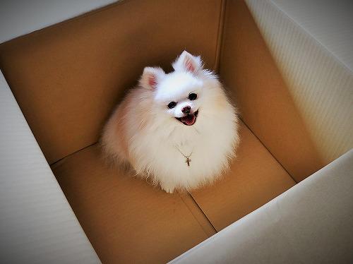 箱の中身は何でしょう_d0360206_13274072.jpg