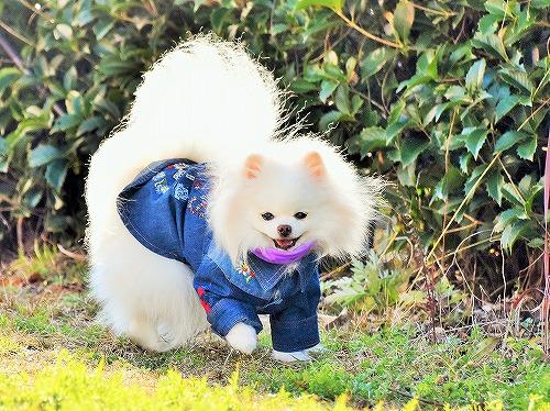 警報騒動後日譚_d0360206_13353314.jpg