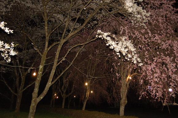 河川公園 夜桜_d0010630_9252315.jpg