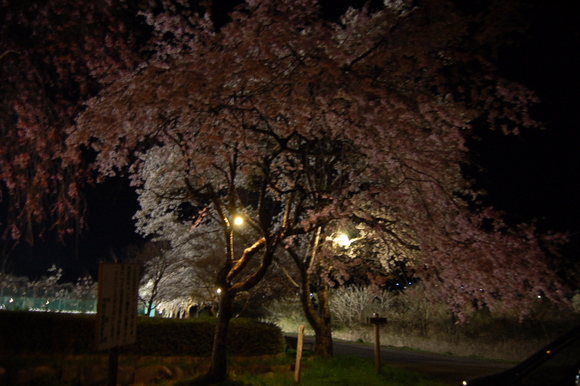 河川公園 夜桜_d0010630_9262062.jpg