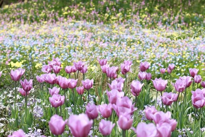 【里山ガーデン - 1 -】_f0348831_18595178.jpg