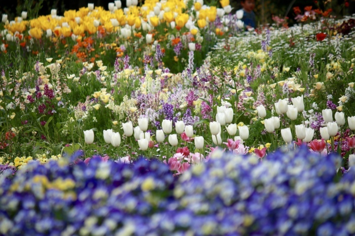 【里山ガーデン - 1 -】_f0348831_19002853.jpg