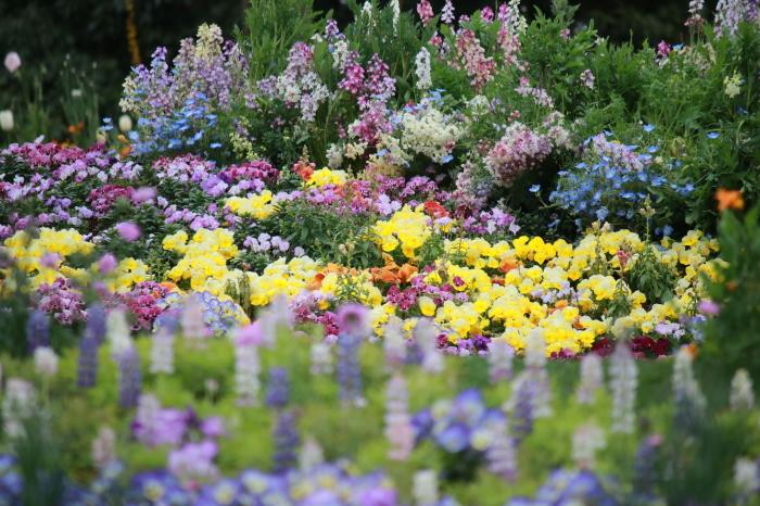 【里山ガーデン - 1 -】_f0348831_19011198.jpg