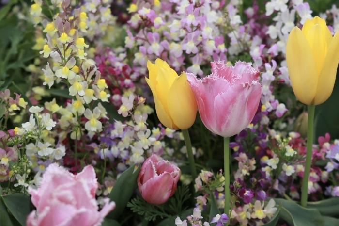 【里山ガーデン - 1 -】_f0348831_19011302.jpg