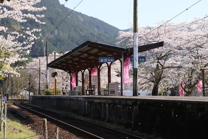 徳山の桜・6♪ ~駿河徳山駅その...