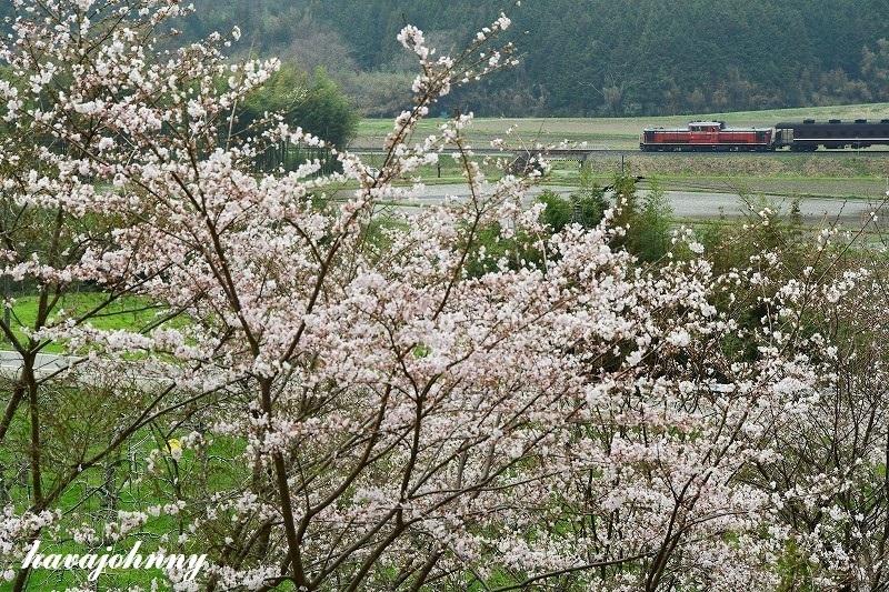 かくれ桜に感嘆~DLやまぐち号~_c0173762_21411828.jpg