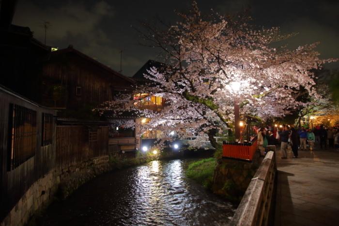 桜  2017  白川_f0021869_23000462.jpg