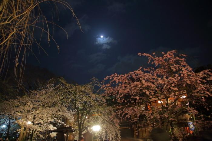 桜  2017  白川_f0021869_23004473.jpg