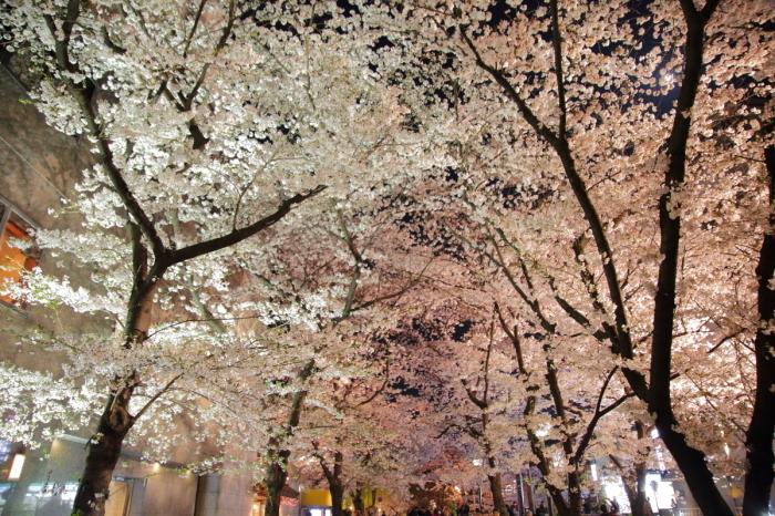 桜  2017  白川_f0021869_23010042.jpg
