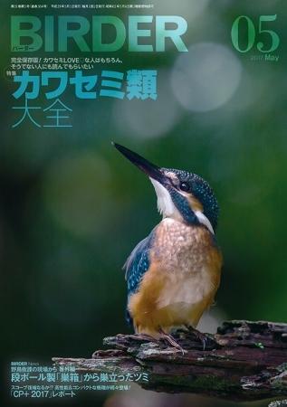 ★BIRDERに吉田くんの記事が…_e0046474_11435043.jpg