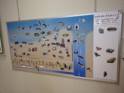 ★重富海岸自然ふれあい館(錦江湾奥)に行ってきました_e0046474_16235538.jpg
