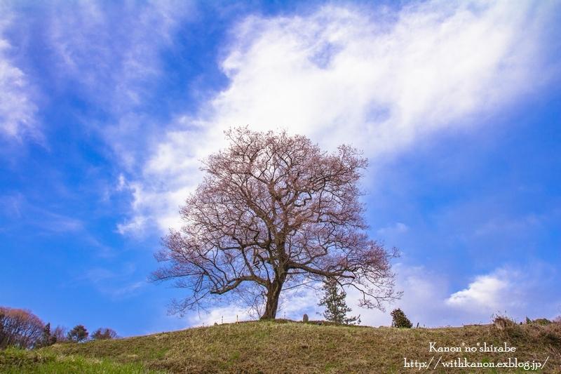 一本桜Ⅱ_d0148187_22085688.jpg