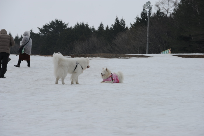 今シーズン最後の雪遊び♪ 1_a0049296_20245155.jpg