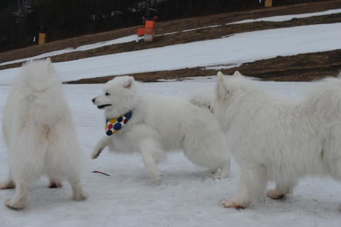 今シーズン最後の雪遊び♪ 1_a0049296_20335744.jpg