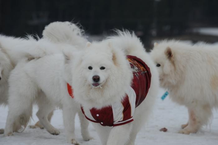 今シーズン最後の雪遊び♪ 1_a0049296_20351660.jpg