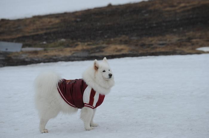 今シーズン最後の雪遊び♪ 1_a0049296_20360287.jpg