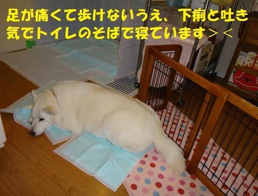 f0121712_09114087.jpg