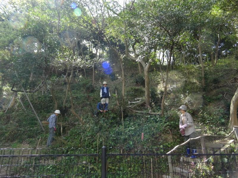 急斜面の笹刈り・・・うみべの森_c0108460_20301686.jpg