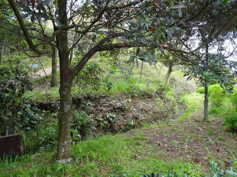 急斜面の笹刈り・・・うみべの森_c0108460_20331010.jpg