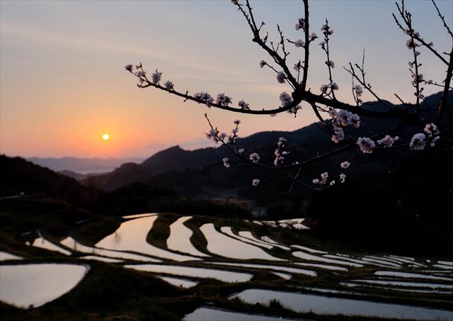 梅の花の咲く頃 1 ~仲春の大山千枚田~_f0018464_7254463.jpg
