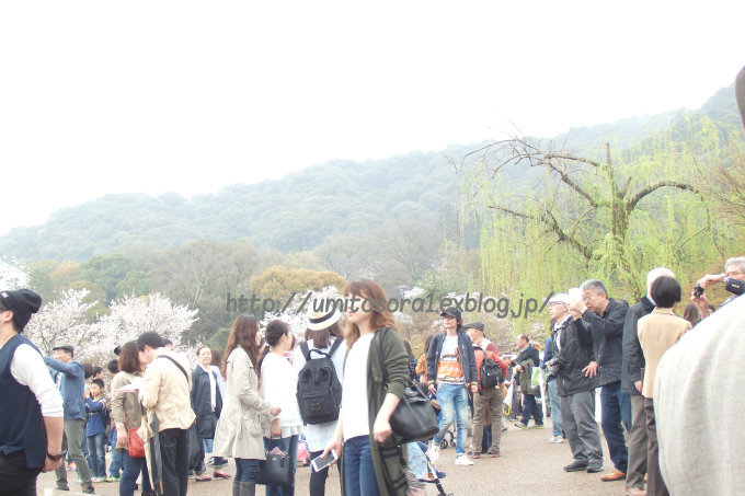 京の春*円山公園_b0324291_23370669.jpg