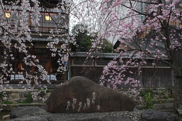 祇園白川の桜 2017 春_f0374092_21294895.jpg