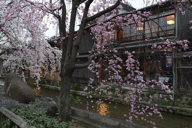 祇園白川の桜 2017 春_f0374092_21342120.jpg