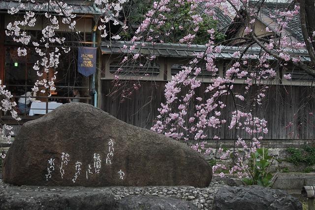 祇園白川の桜 2017 春_f0374092_21354096.jpg