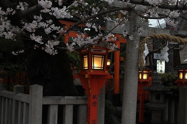 祇園白川の桜 2017 春_f0374092_21461656.jpg