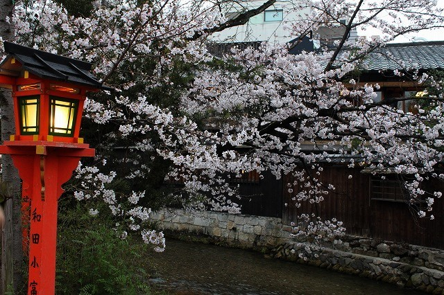 祇園白川の桜 2017 春_f0374092_21580490.jpg