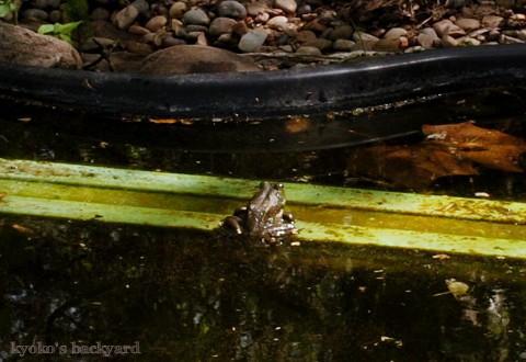 Baileyのカエル狩り_b0253205_02255356.jpg