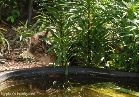 Baileyのカエル狩り_b0253205_02270225.jpg