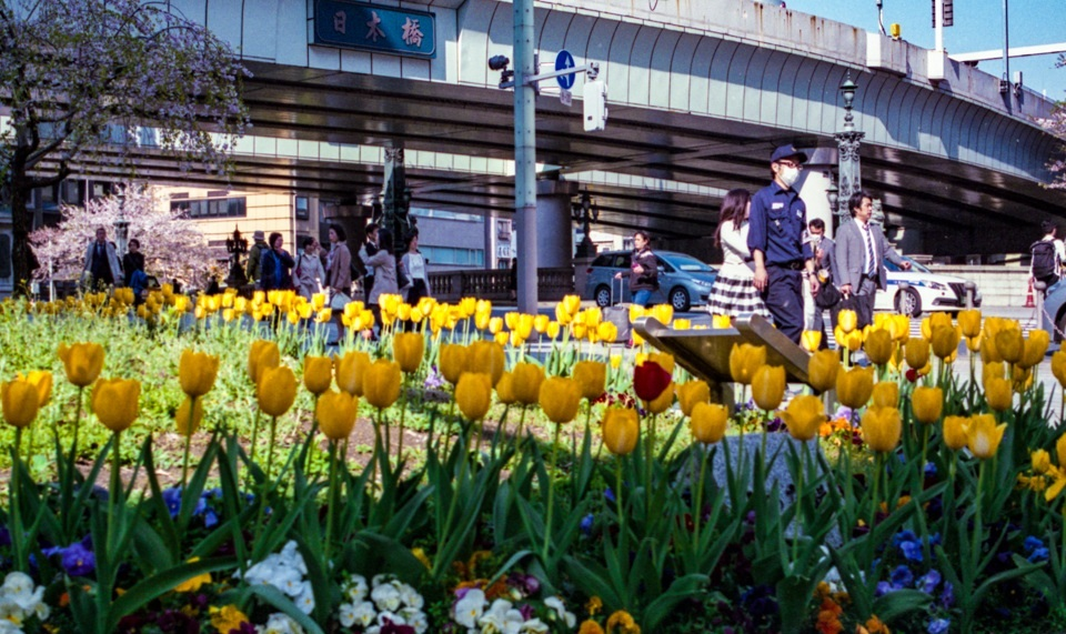 Tulips  ・・・日本橋・・・_f0333031_06435049.jpg
