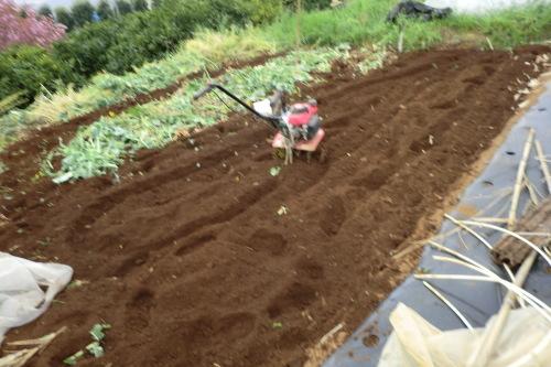 夏野菜の植え付け準備...です。_b0137932_22123009.jpg