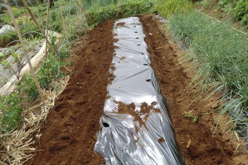 夏野菜の植え付け準備...です。_b0137932_22141180.jpg